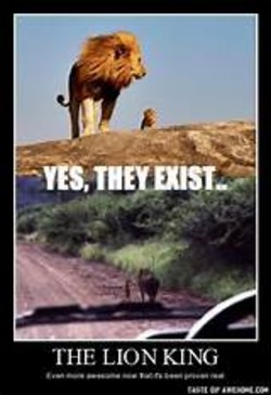 Funny Lion Quote Krazzy Pitures Photos