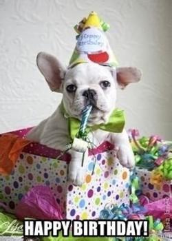 French bulldog birthday Memes